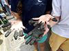 Muddy hands on R/V Tioga