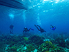 Coral divers