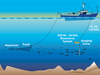 The research team towed a low-frequency broadband imaging sonar near fish schools.