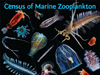 census of marine zooplankton poster