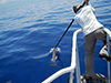 Dolphin tagging