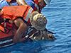 Freeing sea turtles