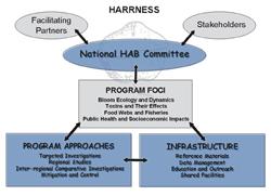 HARRNESS Chart