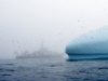 Knorr in Greenland mist