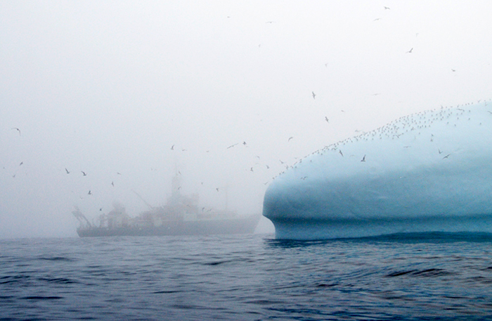 On a foggy August day off the coast of Greenland, photographer Rachel Fletcher took a ride in one of R/V Knorr's small boats (also known as an RHIB) to photograph icebergs and caught this fleeting glimpse of the ship through the mist.