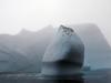 Icebergs off Greenland