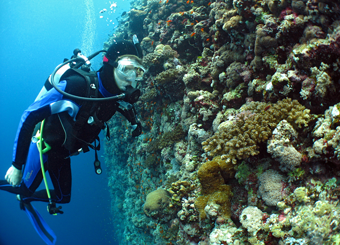 Kelton McMahon, a postdoctoral investigator in WHOI's Fish Ecology Laboratory and a graduate of the MIT/WHOI Joint Program in Oceanography, observes the fish living on a coral reef.