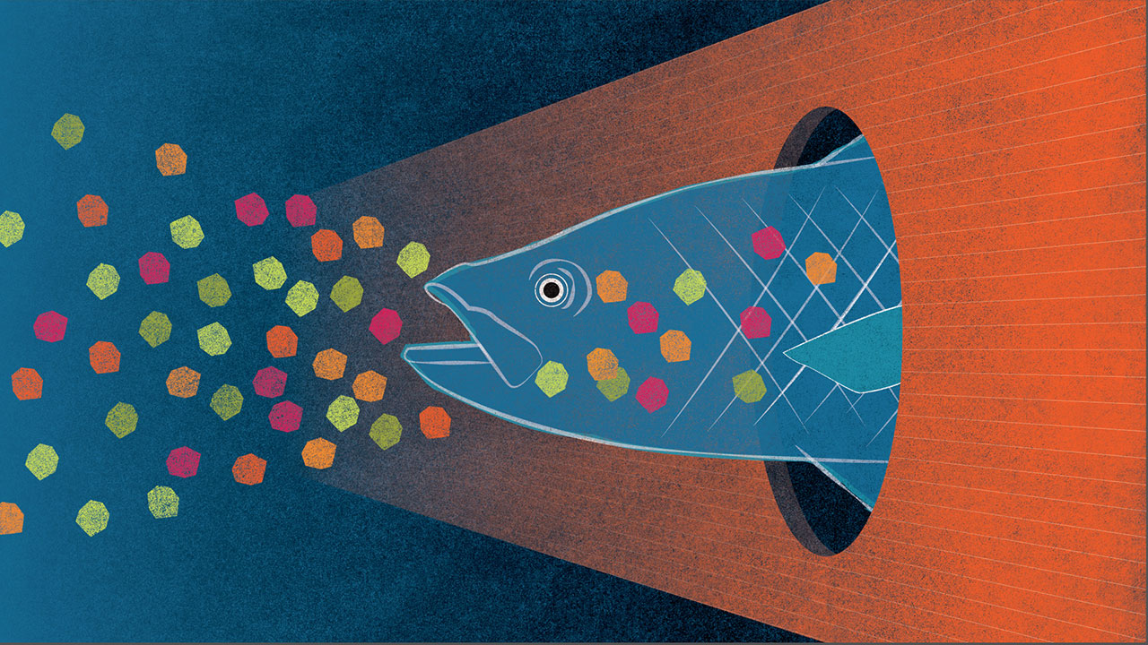 microplastics fish