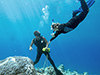 Coring Corals