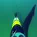 remus sharkcam