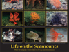 life on seamounts poster