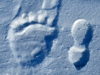 bear and human foot prints in snow