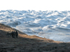 Leverett glacier