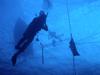 deep ocean divers