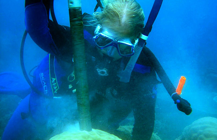 Hannah Barkley drills into a coral colony
