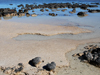 thick mats produced by stromatolite bacteria along shore in Australia