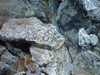 filaments of bacteria on sulfide rocks at Mid-Cayman Rise vents