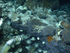Jason's suction sampler by rocks with anemone, eyeless shrimp, snails, and smeary bacteria on rocks near hydrothermal vent at Mid-Cayman Rise
