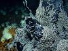 Hydrothermal vent community