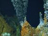 Black smoker vent shrimp