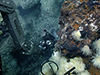 Cayman vent fluids