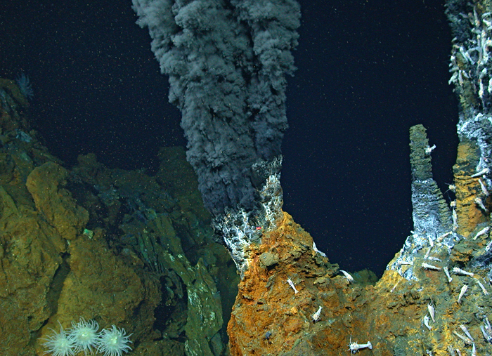 Deep-sea shrimp thrive at one of the planet's hottest black smoker hydrothermal vents, where the temperature of expelled fluids measured 400°C (about 750°F). The
