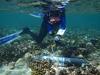 Coral survival