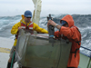 Justin Ossolinski and Ben van Mooy working on deck of Oceanus.