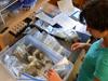 Paleoforest samples