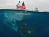 divers prepare Alvin for a mission