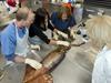 Studying humboldt squid