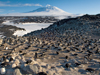 Penguins as sentinels of a changing ecosystem