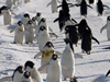 penguin thoroughfare