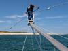 White shark tagging