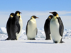 Penguins in Weddell Sea