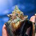 Ocean Acidification Initiative