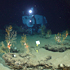 alvin on the seafloor