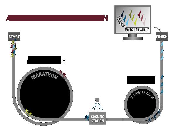 A Molecular Marathon