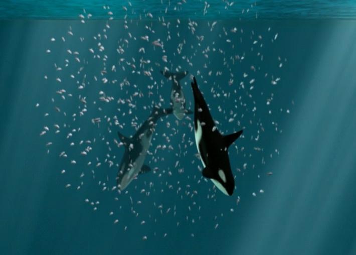 Orca Feeding