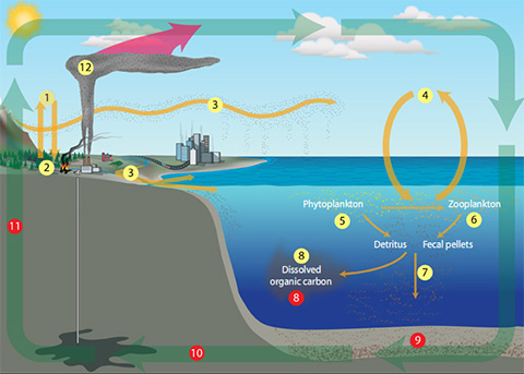 Following the Carbon Cycle