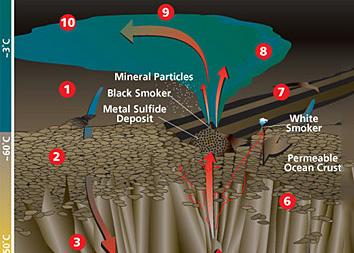 Hydrothermal vent circulation