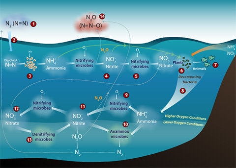 Nitrogen Cycle Interactive