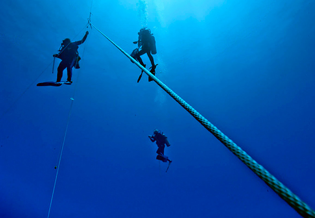 Scientists studying them SCUBA dive in the open ocean