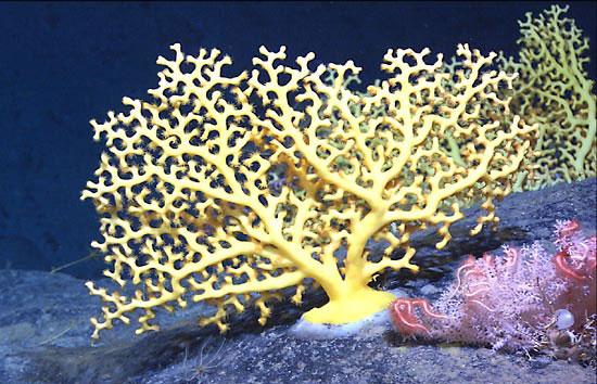 Coral Gardens in the Dark Depths