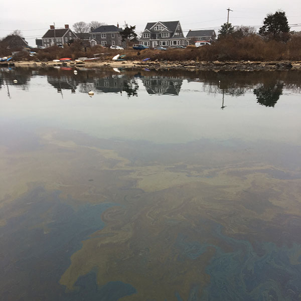 Woods Hole Oil Spill