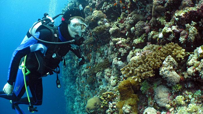 ocean life institute woods hole oceanographic institution