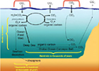 Climate Variability, Ocean Circulation, and Ecosystems