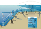 Coastal Ocean Dynamics and Ecosystems