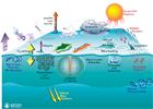Ocean Atmosphere Exchange