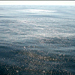 Sea surface slicked with oil from the natural seeps off Santa Barbara.